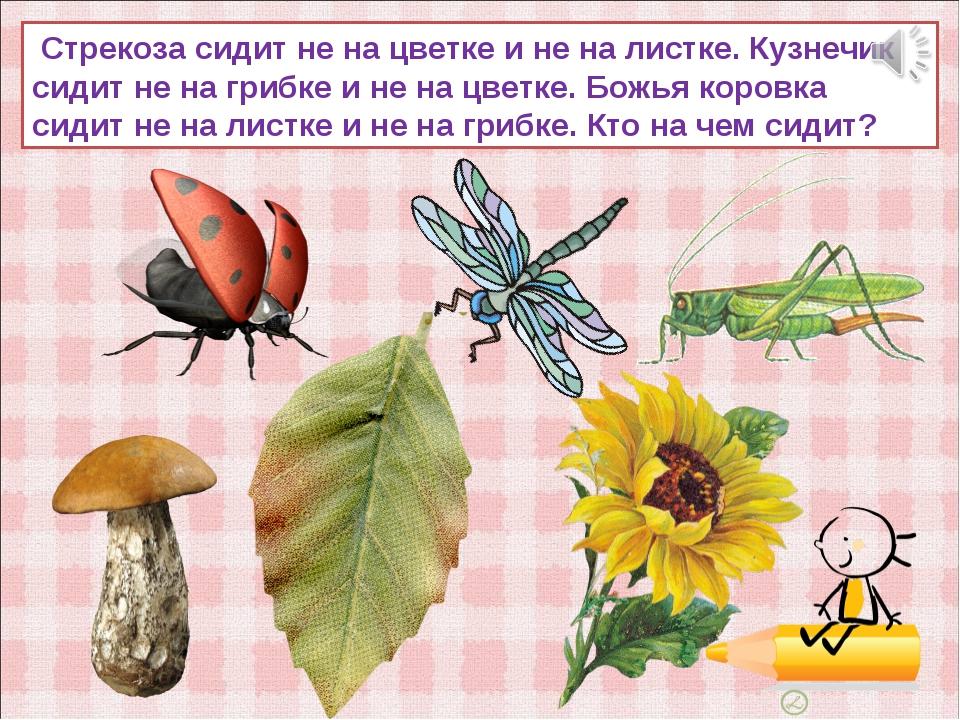 Стрекоза сидит не на цветке и не на листке. Кузнечик сидит не на грибке и не...