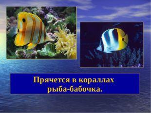 Прячется в кораллах рыба-бабочка.
