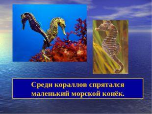 Среди кораллов спрятался маленький морской конёк.