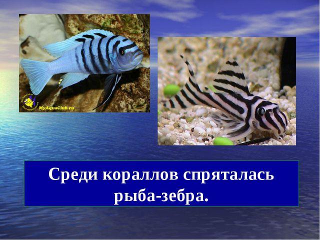 Среди кораллов спряталась рыба-зебра.