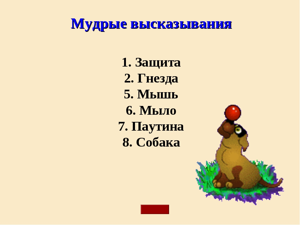 Мудрые высказывания 1. Защита 2. Гнезда 5. Мышь 6. Мыло 7. Паутина 8. Собака