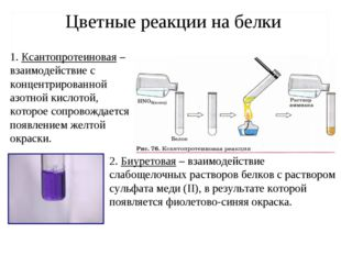 Цветные реакции на белки 1. Ксантопротеиновая – взаимодействие с концентриров