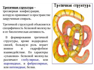 Третичная структура – трехмерная конфигурация, которую принимает в пространст
