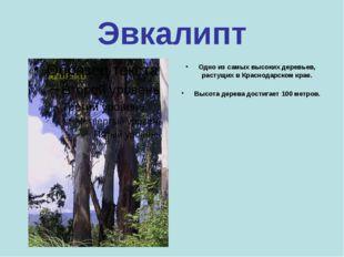 Самшит Самое твёрдое дерево на Земле. Его древесина столь прочна, что может с