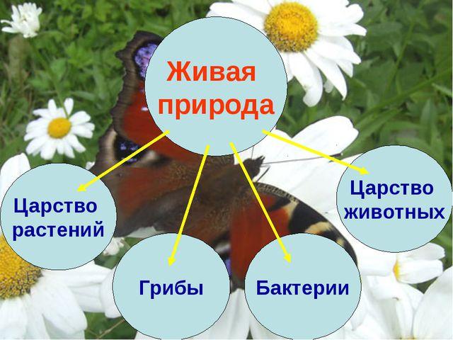 Живая природа Царство растений Царство животных Бактерии Грибы
