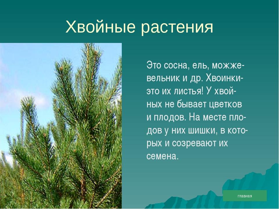 Хвойные растения Это сосна, ель, можже- вельник и др. Хвоинки- это их листья!...