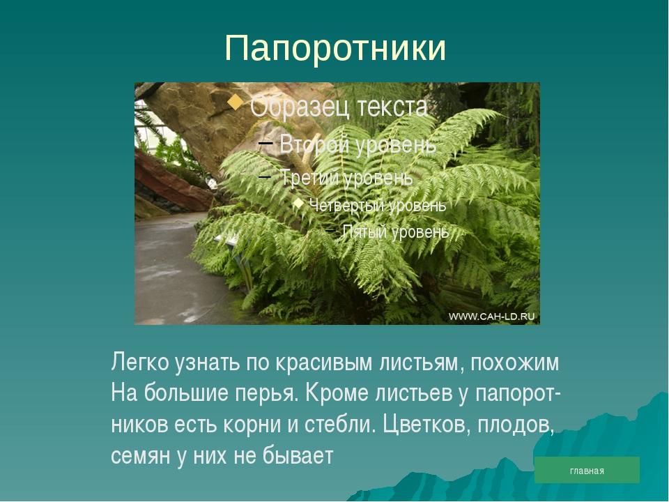 Папоротники Легко узнать по красивым листьям, похожим На большие перья. Кроме...
