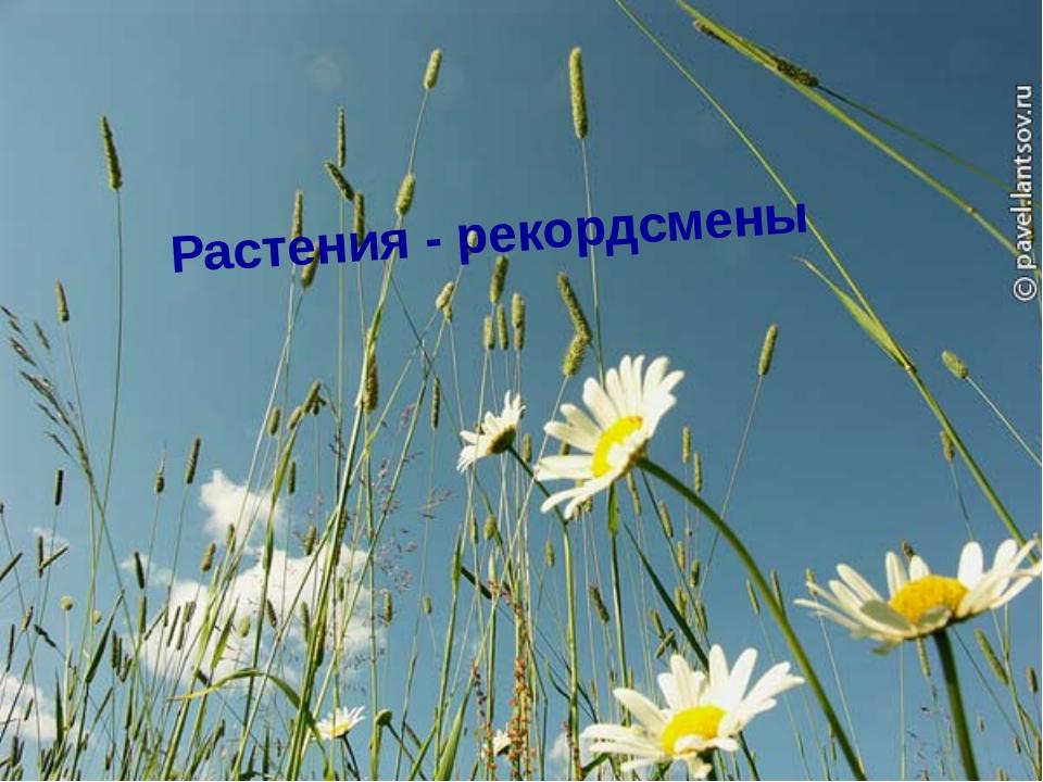 Эвкалипт Одно из самых высоких деревьев, растущих в Краснодарском крае. Высот...