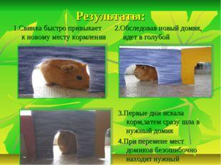 Результаты: 1.Свинка быстро привыкает к новому месту кормления 2.Обследовав н