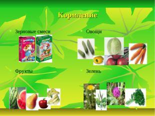 Кормление Зерновые смеси Овощи Фрукты Зелень