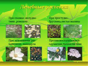 Лечебные растения При спазмах желудка-тмин ,ромашка При простудах-брусника,ли