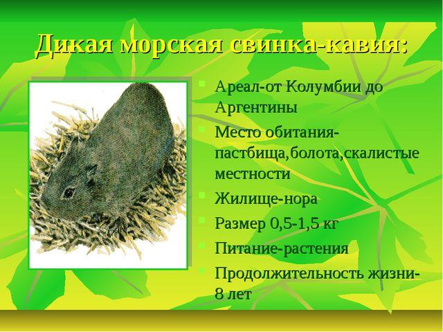 Дикая морская свинка-кавия: Ареал-от Колумбии до Аргентины Место обитания-пас...