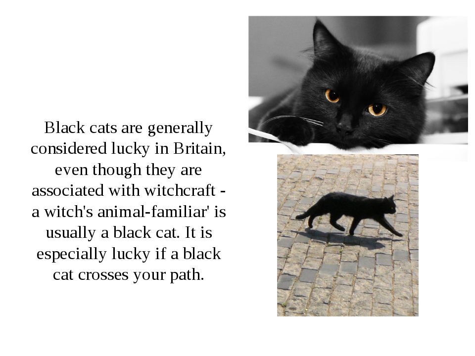 Black cats are generally considered lucky in Britain, even though they are a...