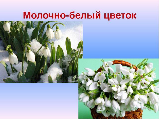 Молочно-белый цветок