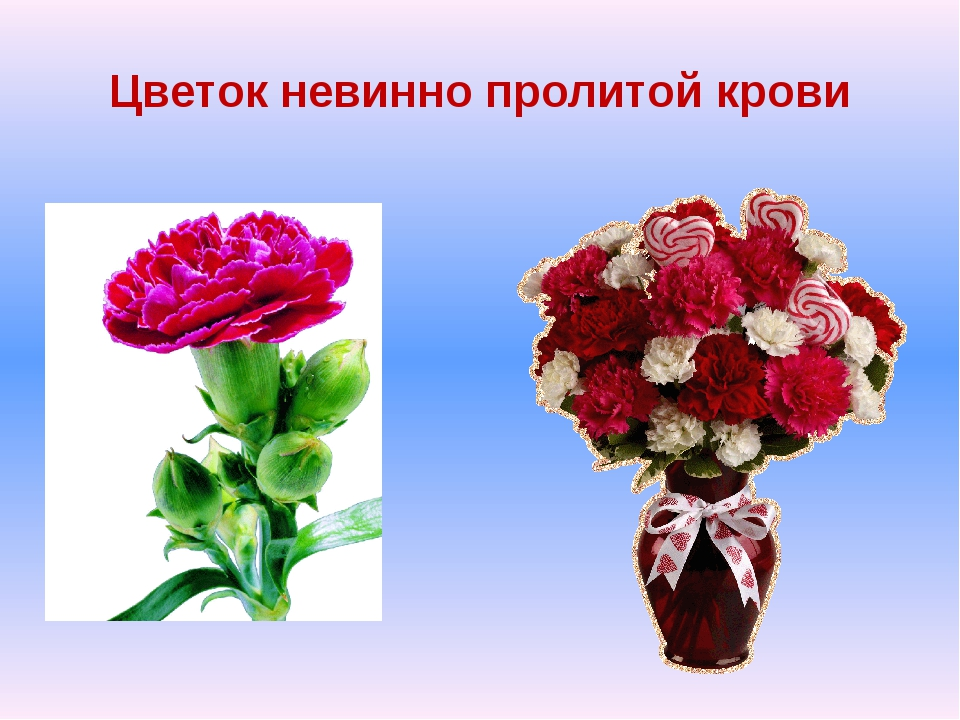 Цветок невинно пролитой крови