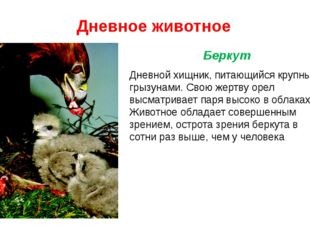 Дневное животное Дневной хищник, питающийся крупными грызунами. Свою жертву о