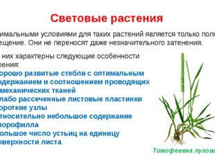 Световые растения Оптимальными условиями для таких растений является только п