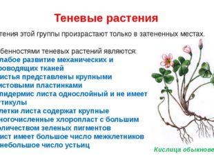 Теневые растения Растения этой группы произрастают только в затененных местах