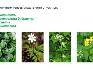 К типичным теневым растениям относятся: копытень ветреница дубравная сныть чи
