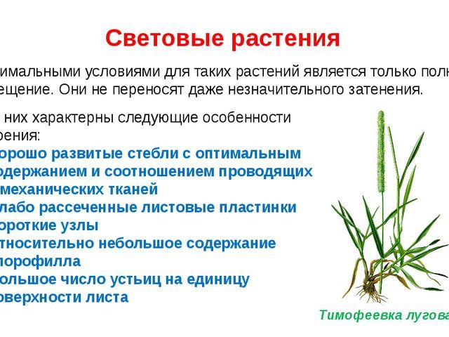 Световые растения Оптимальными условиями для таких растений является только п...