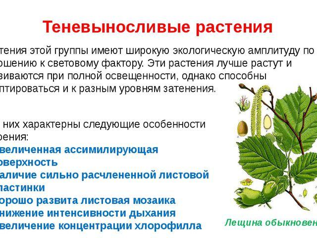 Теневыносливые растения Растения этой группы имеют широкую экологическую ампл...