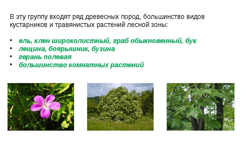 В эту группу входят ряд древесных пород, большинство видов кустарников и трав...