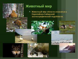 Животный мир Животный мир области относится к Европейско-Сибирской зоогеограф