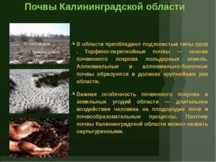 Почвы Калининградской области В области преобладают подзолистые типыпочв. То