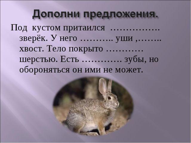 Под кустом притаился ……………. зверёк. У него ……….. уши ,…….. хвост. Тело покрыт...