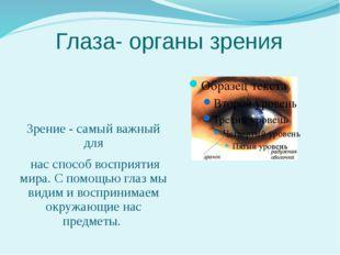 Глаза- органы зрения Зрение - самый важный для нас способ восприятия мира. С