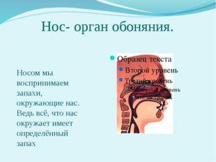 Нос- орган обоняния. Носом мы воспринимаем запахи, окружающие нас. Ведь всё,