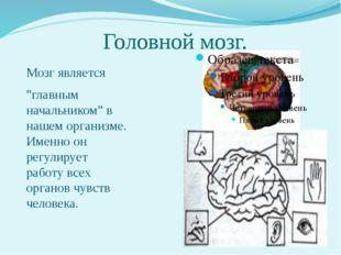 """Головной мозг. Мозг является """"главным начальником"""" в нашем организме. Именно"""