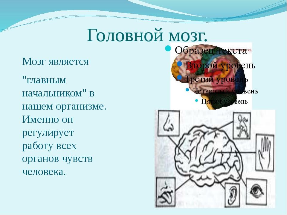 """Головной мозг. Мозг является """"главным начальником"""" в нашем организме. Именно..."""