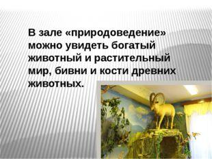 В зале «природоведение» можно увидеть богатый животный и растительный мир, би