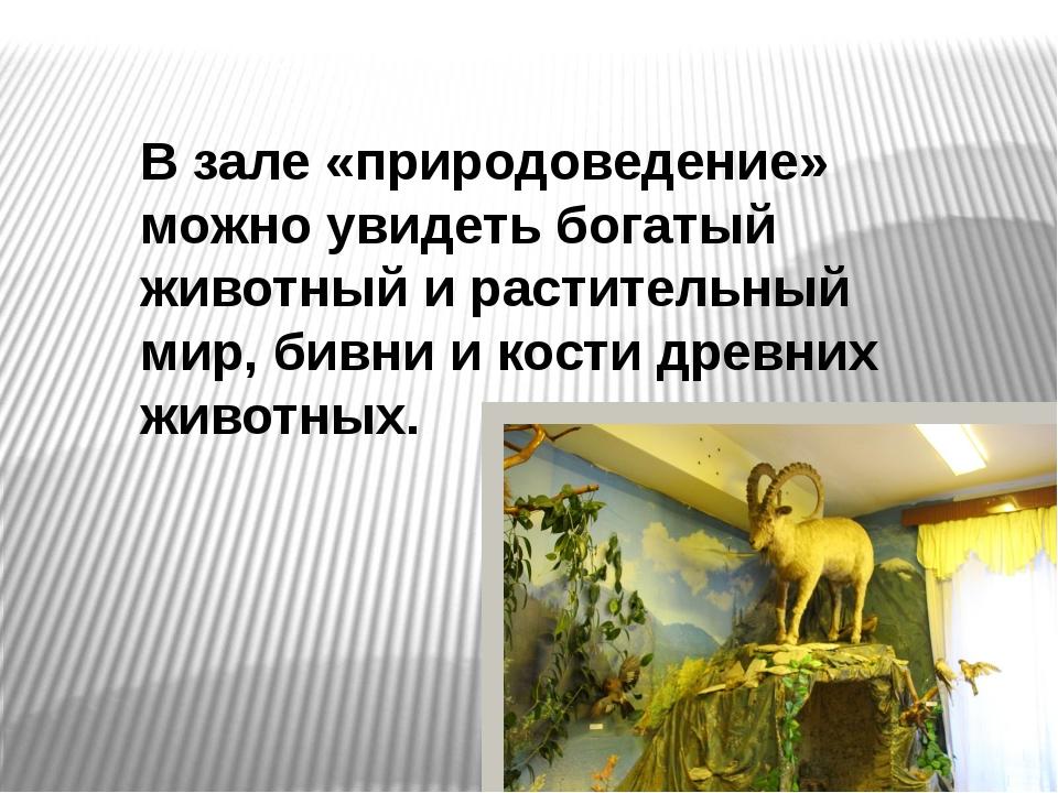 В зале «природоведение» можно увидеть богатый животный и растительный мир, би...