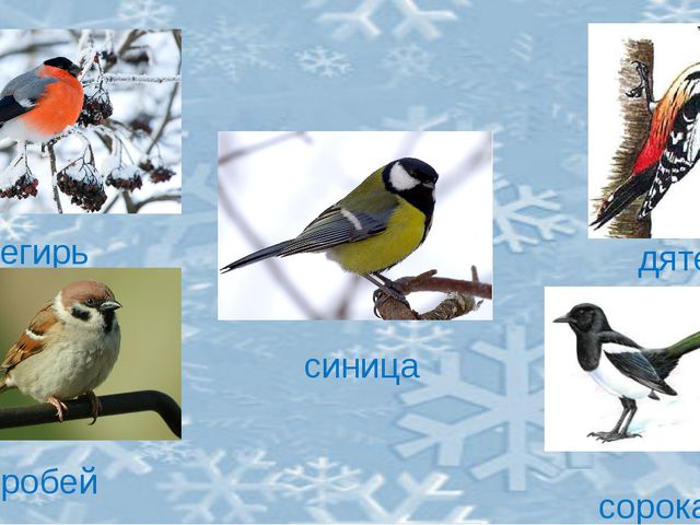 снегирь дятел воробей сорока синица
