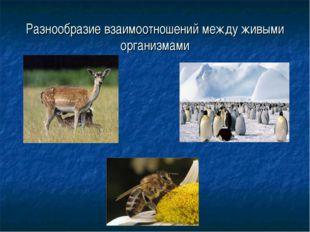 Разнообразие взаимоотношений между живыми организмами
