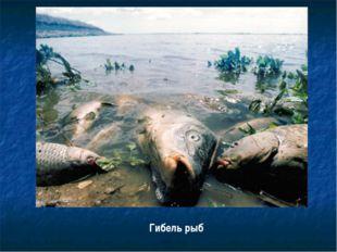 Гибель рыб