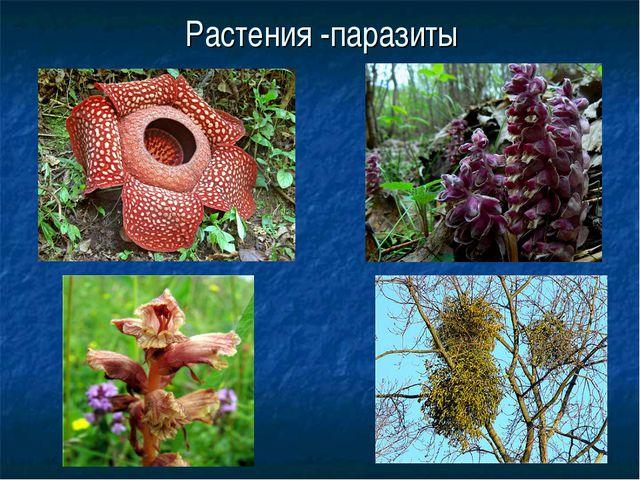 Растения -паразиты