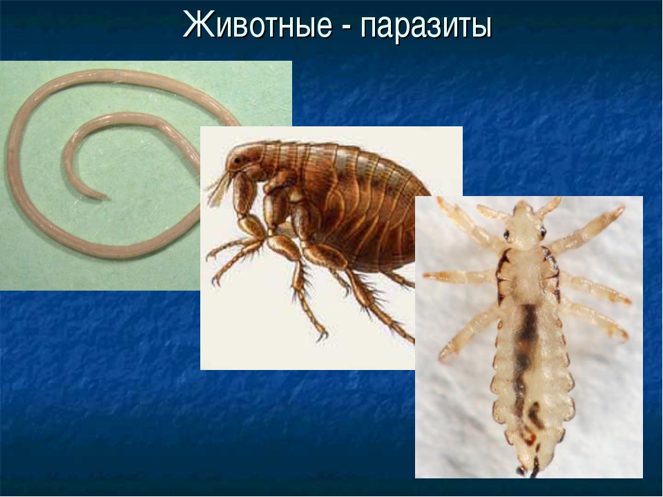 Животные - паразиты