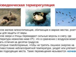 Поведенческая терморегуляция Многие мелкие млекопитающие, обитающие в жарких