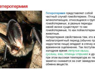 Гетеротермия Гетеротермия представляет собой частный случай гомойотермии. Пти