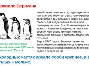 Правило Бергмана Пингвины: императорский (65°ю.ш.), магеллана (50° ю.ш.), га
