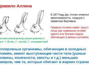 Правило Аллена Относительный размер ушных раковин у зайцев: 1- беляк, 2 - тол