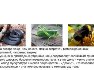На севере чаще, чем на юге, можно встретить темноокрашенных рептилий, наприм