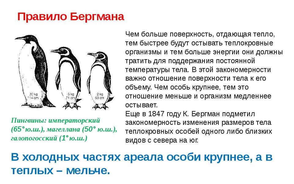 Правило Бергмана Пингвины: императорский (65°ю.ш.), магеллана (50° ю.ш.), га...