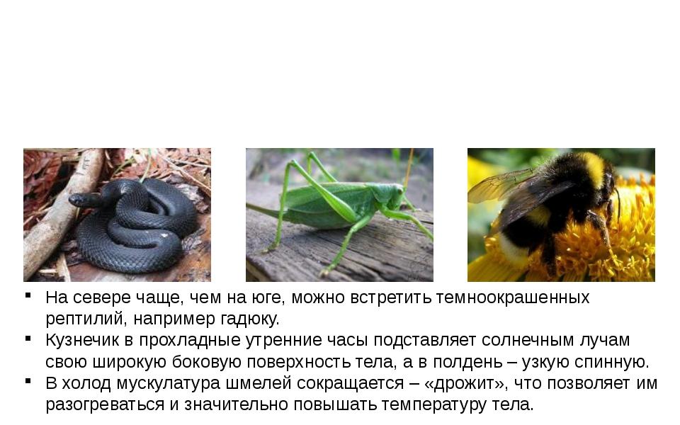 На севере чаще, чем на юге, можно встретить темноокрашенных рептилий, наприм...