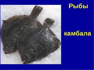 камбала Рыбы