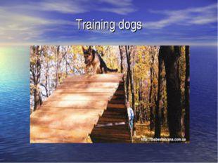 Training dogs