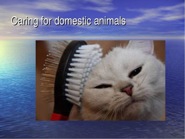 Caring for domestic animals